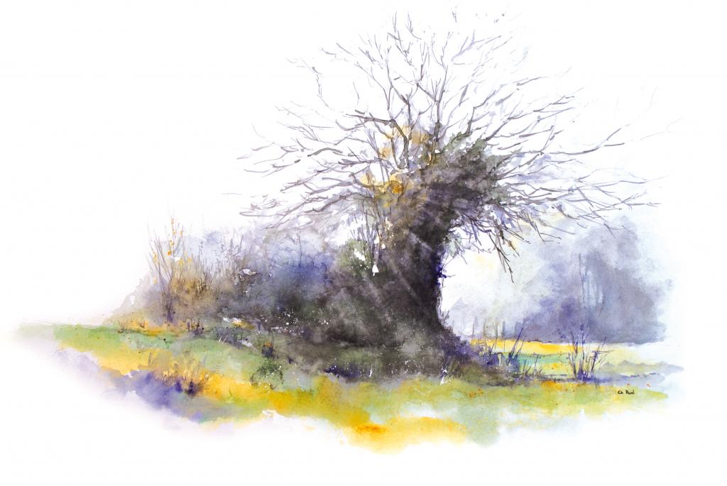 vieil arbre nu
